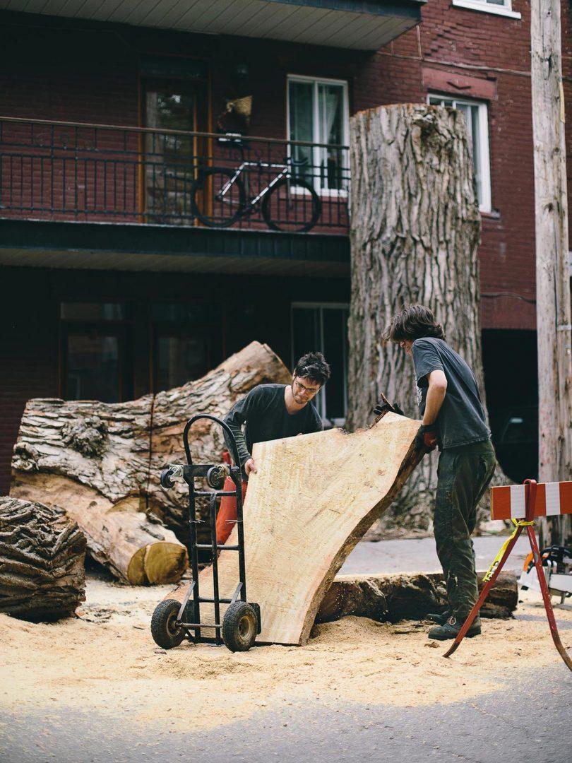 recyclage des arbres urbains